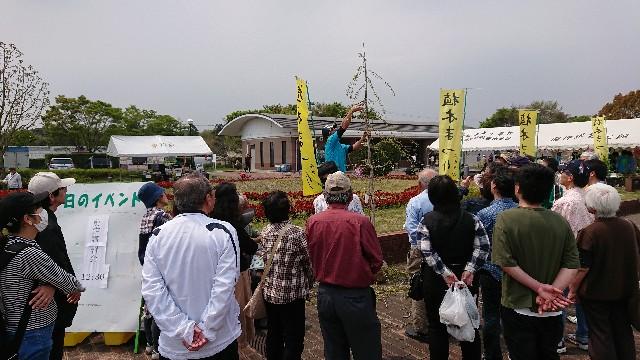 f:id:tosshii-plants:20190421214956j:image