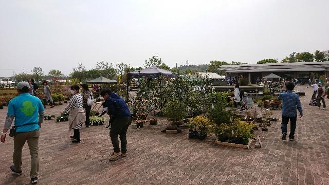 f:id:tosshii-plants:20190421215137j:image
