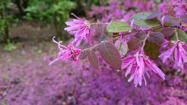 f:id:tosshii-plants:20190428172856j:image