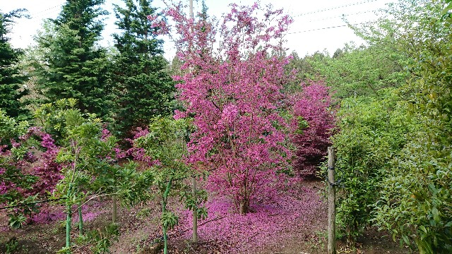 f:id:tosshii-plants:20190428225627j:image