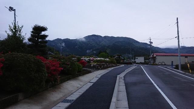 f:id:tosshii-plants:20190501215244j:image