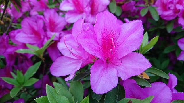 f:id:tosshii-plants:20190507221842j:image