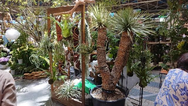 f:id:tosshii-plants:20190511220609j:image