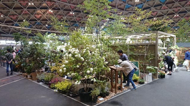 f:id:tosshii-plants:20190511220632j:image