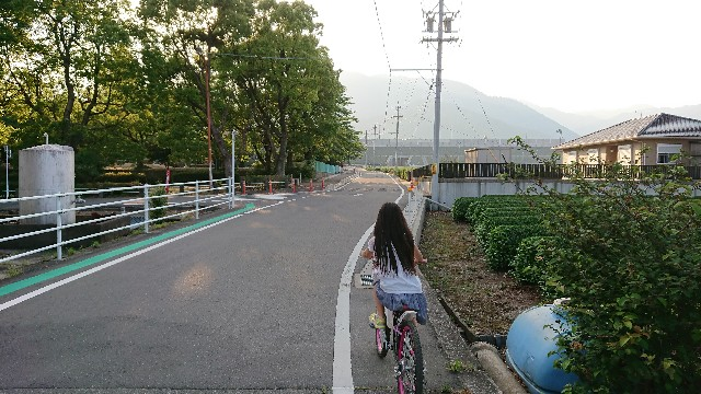 f:id:tosshii-plants:20190526222800j:image