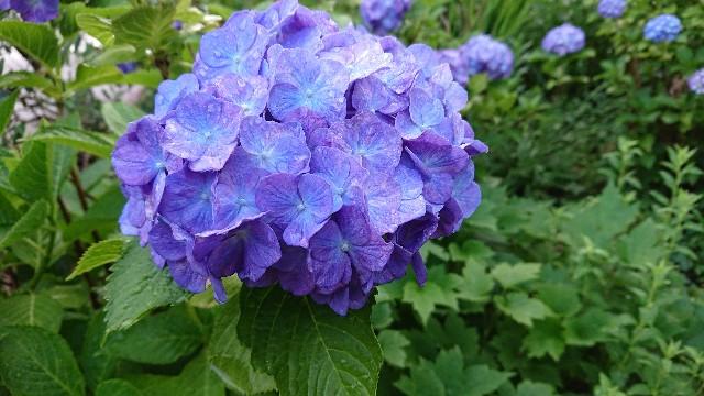 f:id:tosshii-plants:20190610221717j:image