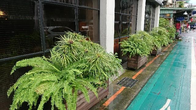 f:id:tosshii-plants:20190701215134j:image
