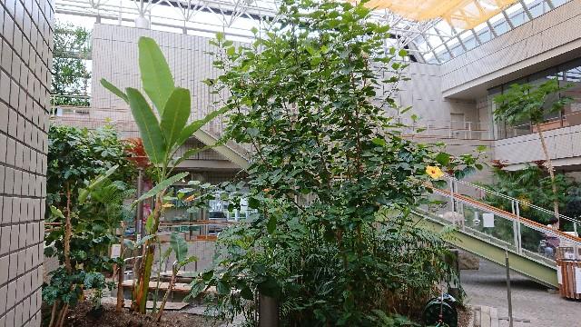f:id:tosshii-plants:20190718210002j:image