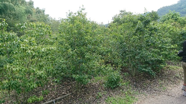 f:id:tosshii-plants:20190822204024j:image