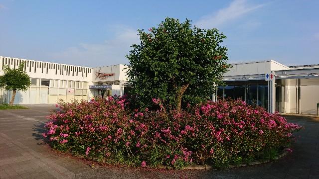 f:id:tosshii-plants:20190828165648j:image