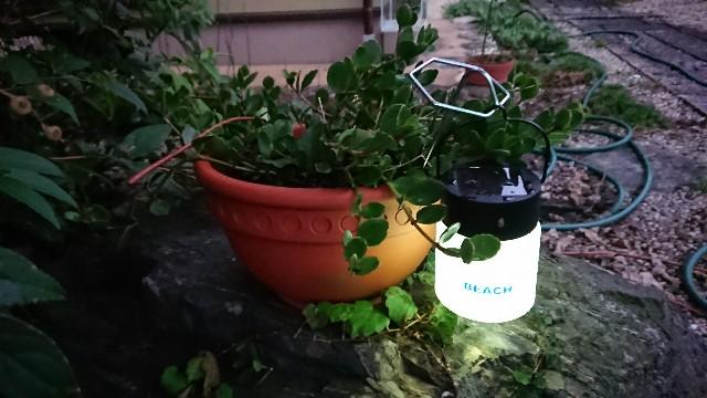 f:id:tosshii-plants:20190831194230j:image