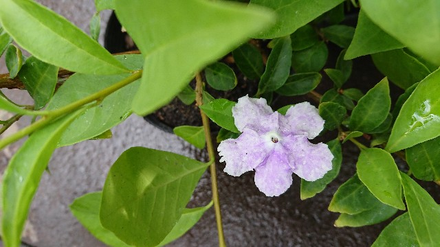 f:id:tosshii-plants:20190919220915j:image
