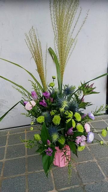 f:id:tosshii-plants:20190921215607j:image
