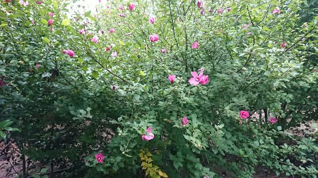 f:id:tosshii-plants:20190924201714j:image