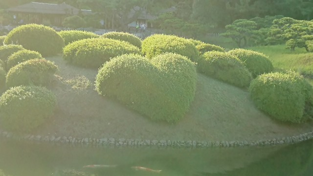 f:id:tosshii-plants:20190926214831j:image