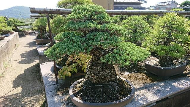 f:id:tosshii-plants:20190926215023j:image