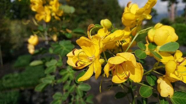 f:id:tosshii-plants:20191004123520j:image