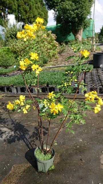 f:id:tosshii-plants:20191004123659j:image