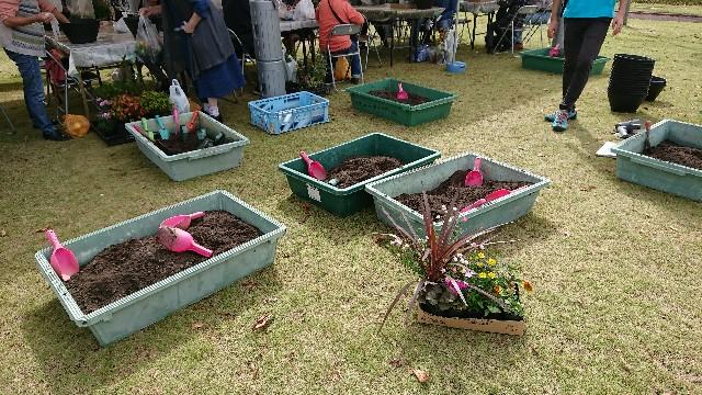 f:id:tosshii-plants:20191020225155j:image