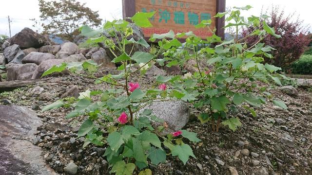 f:id:tosshii-plants:20191021224528j:image