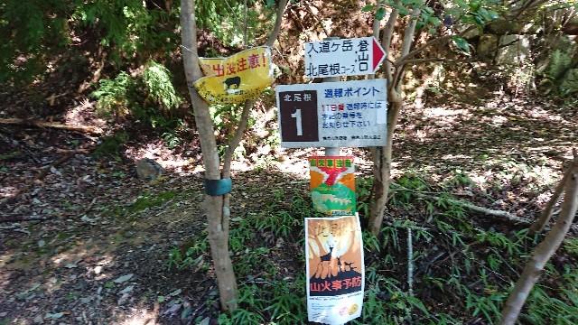f:id:tosshii-plants:20191022224609j:image