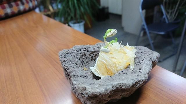 f:id:tosshii-plants:20191025221607j:image