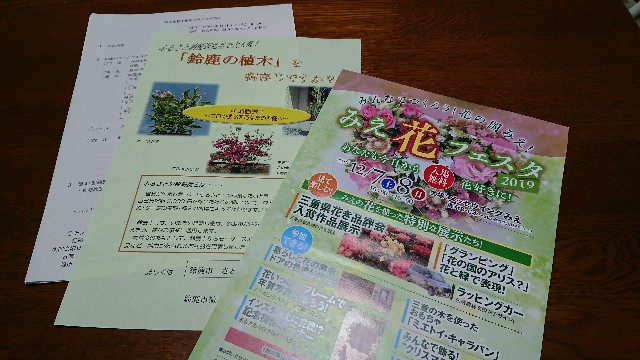 f:id:tosshii-plants:20191108135747j:image