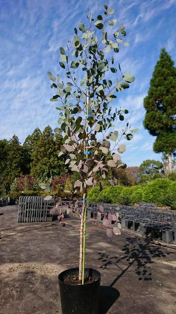 f:id:tosshii-plants:20191108181349j:image