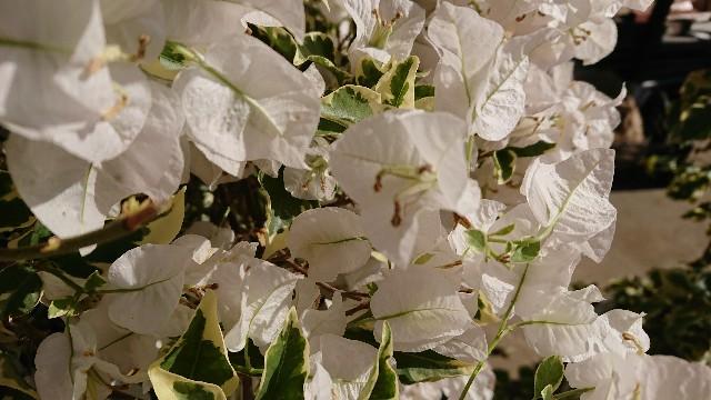 f:id:tosshii-plants:20191116220938j:image