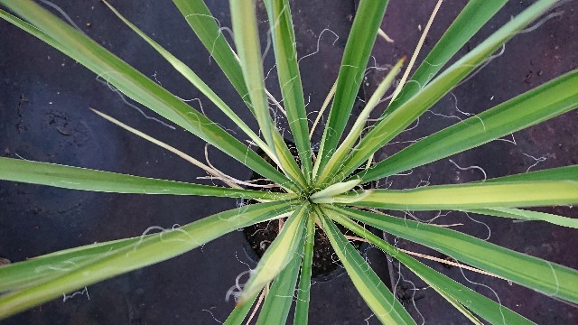 f:id:tosshii-plants:20191117175917j:image