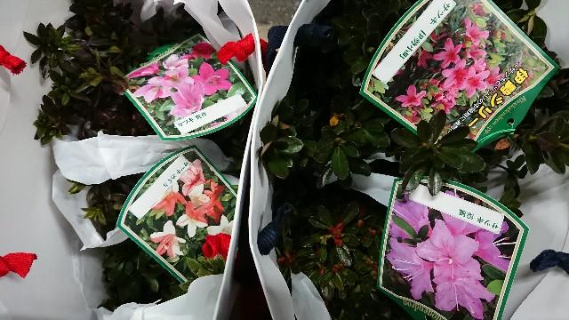 f:id:tosshii-plants:20191126224244j:image