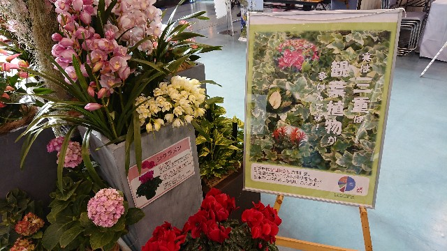 f:id:tosshii-plants:20191208193525j:image