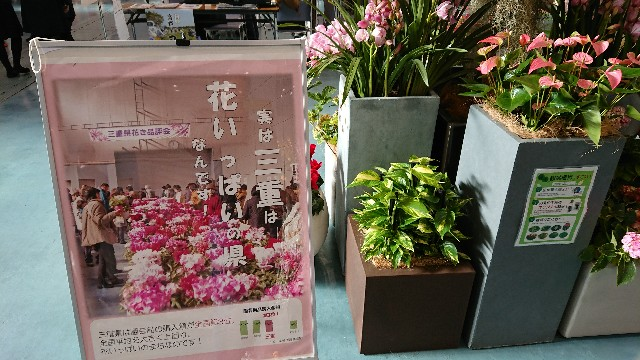 f:id:tosshii-plants:20191208193550j:image