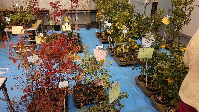 f:id:tosshii-plants:20191208193610j:image