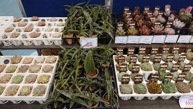 f:id:tosshii-plants:20191208193955j:image