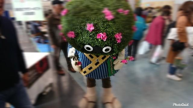 f:id:tosshii-plants:20191208194725j:image