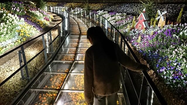 f:id:tosshii-plants:20200104165941j:image