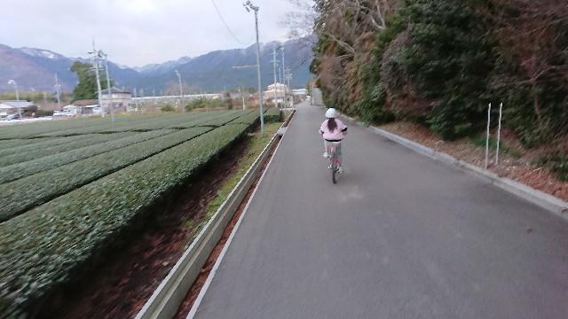 f:id:tosshii-plants:20200105183334j:image