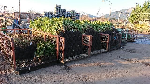 f:id:tosshii-plants:20200120170317j:image