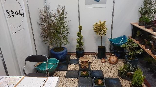 f:id:tosshii-plants:20200122135213j:image