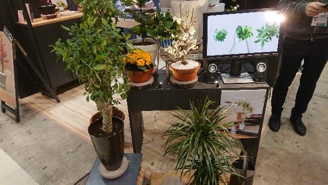 f:id:tosshii-plants:20200122135343j:image