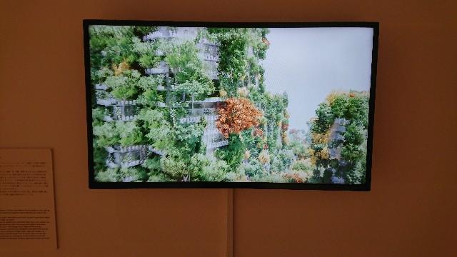 f:id:tosshii-plants:20200123224927j:image