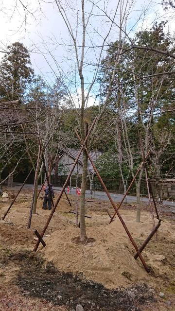 f:id:tosshii-plants:20200207225959j:image