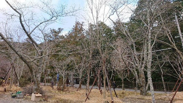 f:id:tosshii-plants:20200207230009j:image