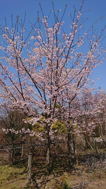 f:id:tosshii-plants:20200319214922j:image