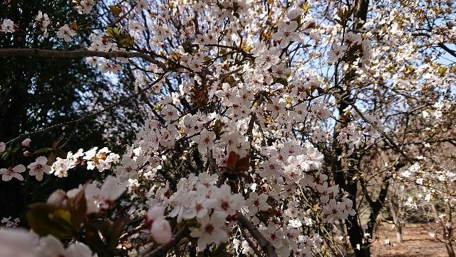 f:id:tosshii-plants:20200325161420j:image