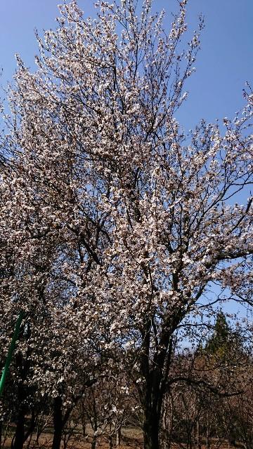 f:id:tosshii-plants:20200325161440j:image