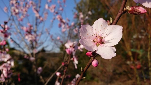 f:id:tosshii-plants:20200326183832j:image
