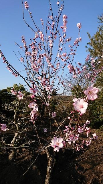 f:id:tosshii-plants:20200326184039j:image