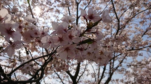 f:id:tosshii-plants:20200404211342j:image